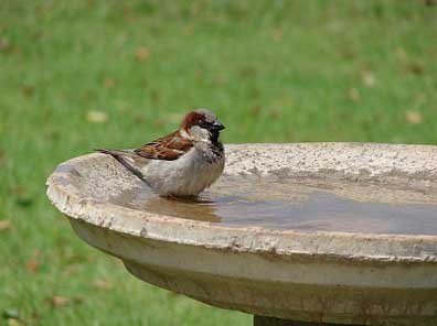 Cleaning Bird Baths helps with Mosquito Yard Treatment