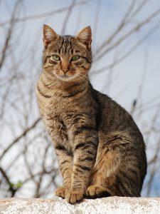 Help! My Cat Has Fleas - Mosquito Tek of Manassas