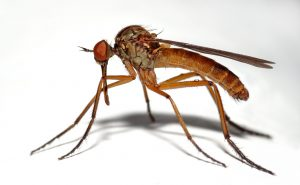 10 Facts About Mosquitoes