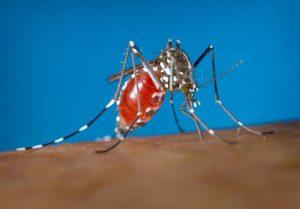 mosquito extermination